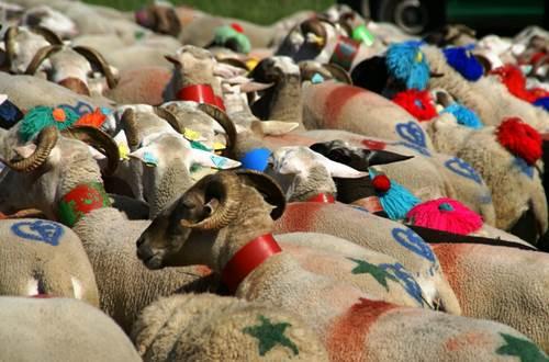Revenons à nos moutons ©