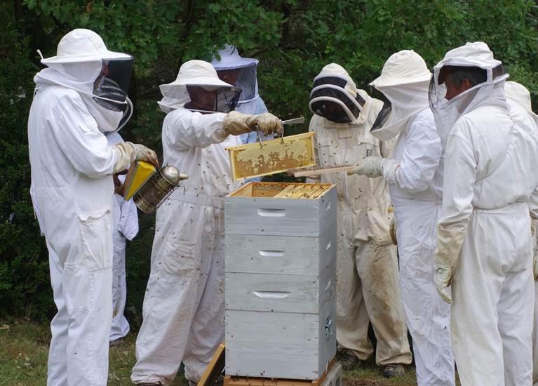 L'apiculture par la pratique