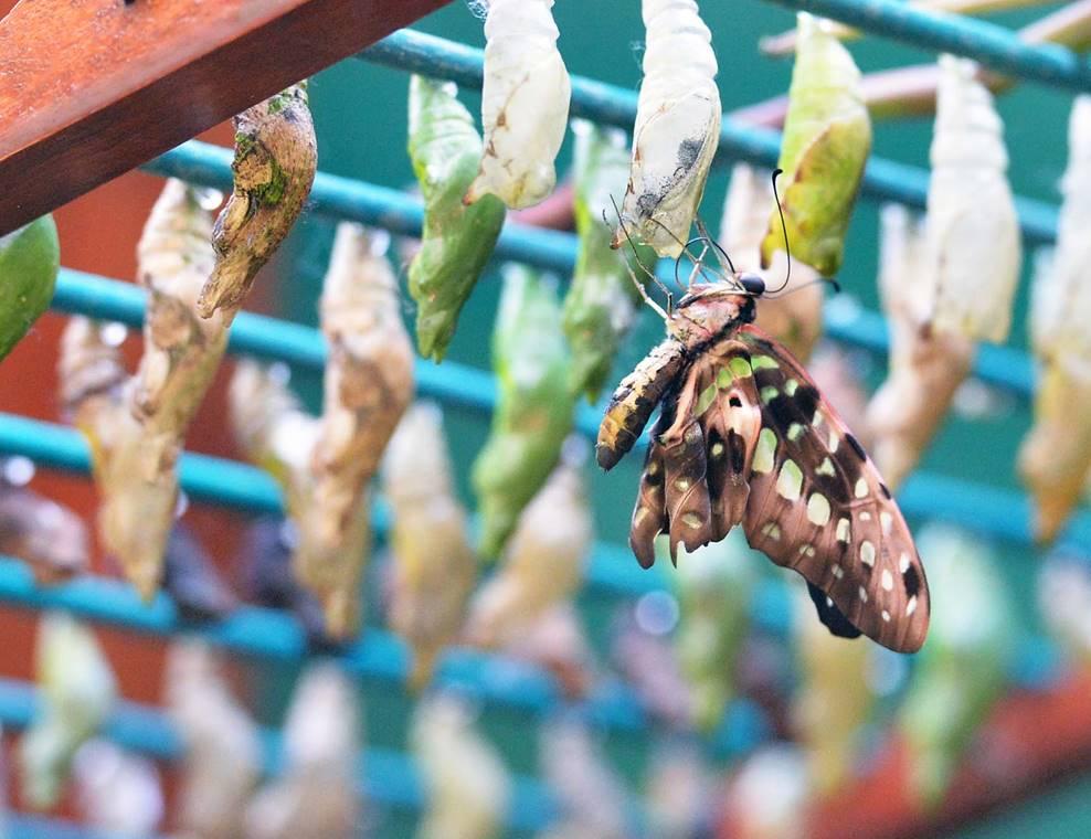 jardin-aux-papillons-morbihan-bretagne-sud-19
