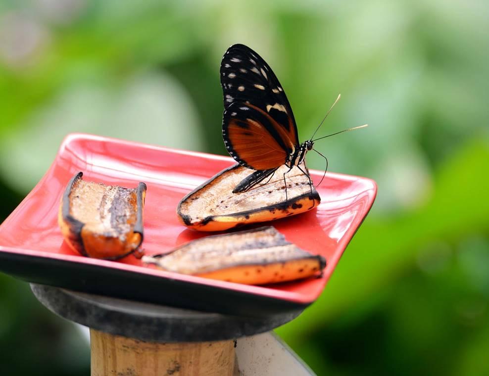 jardin-aux-papillons-morbihan-bretagne-sud-12