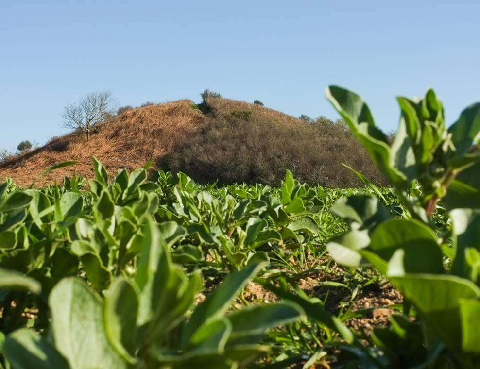 Tumulus de Tumiac ou Butte de César Arzon (3) - Morbihan Bretagne Sud