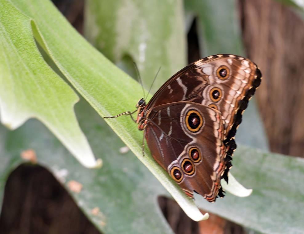 jardin-aux-papillons-morbihan-bretagne-sud-18
