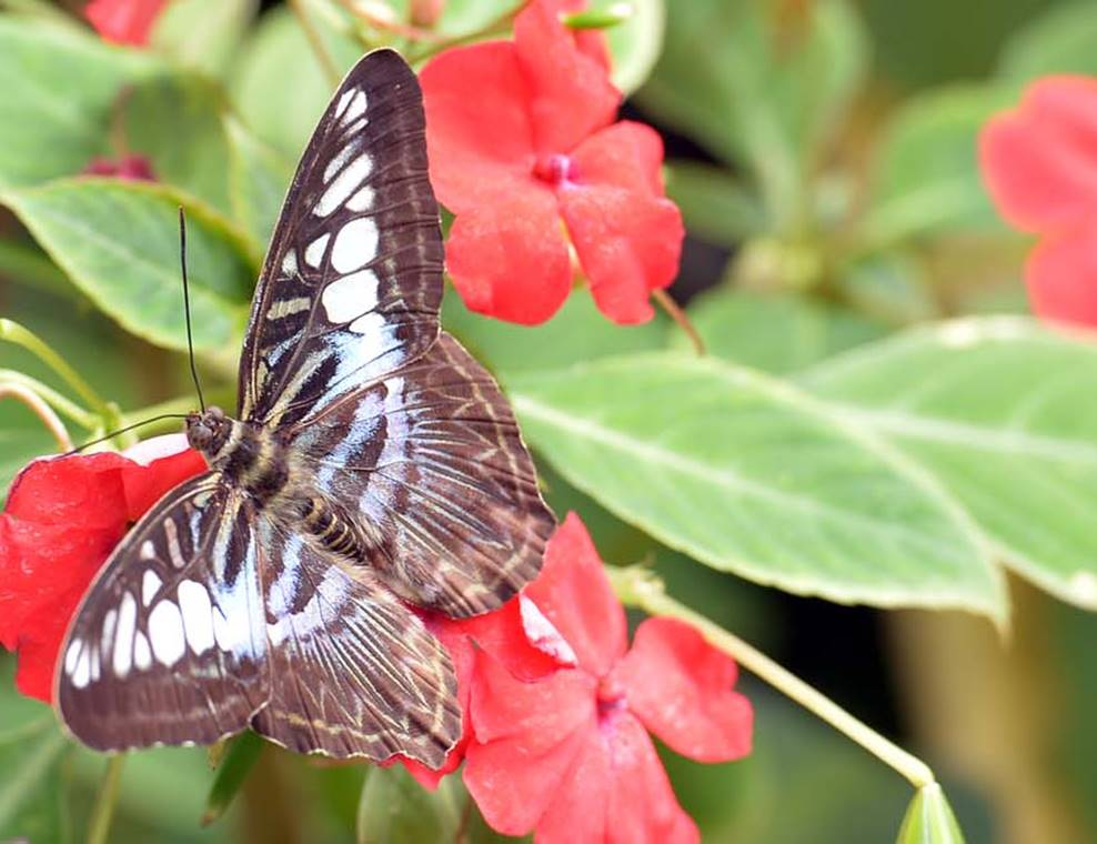 jardin-aux-papillons-morbihan-bretagne-sud-17