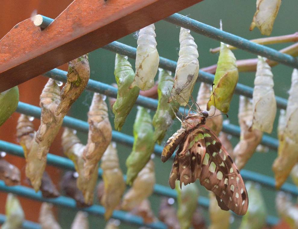jardin-aux-papillons-morbihan-bretagne-sud-20