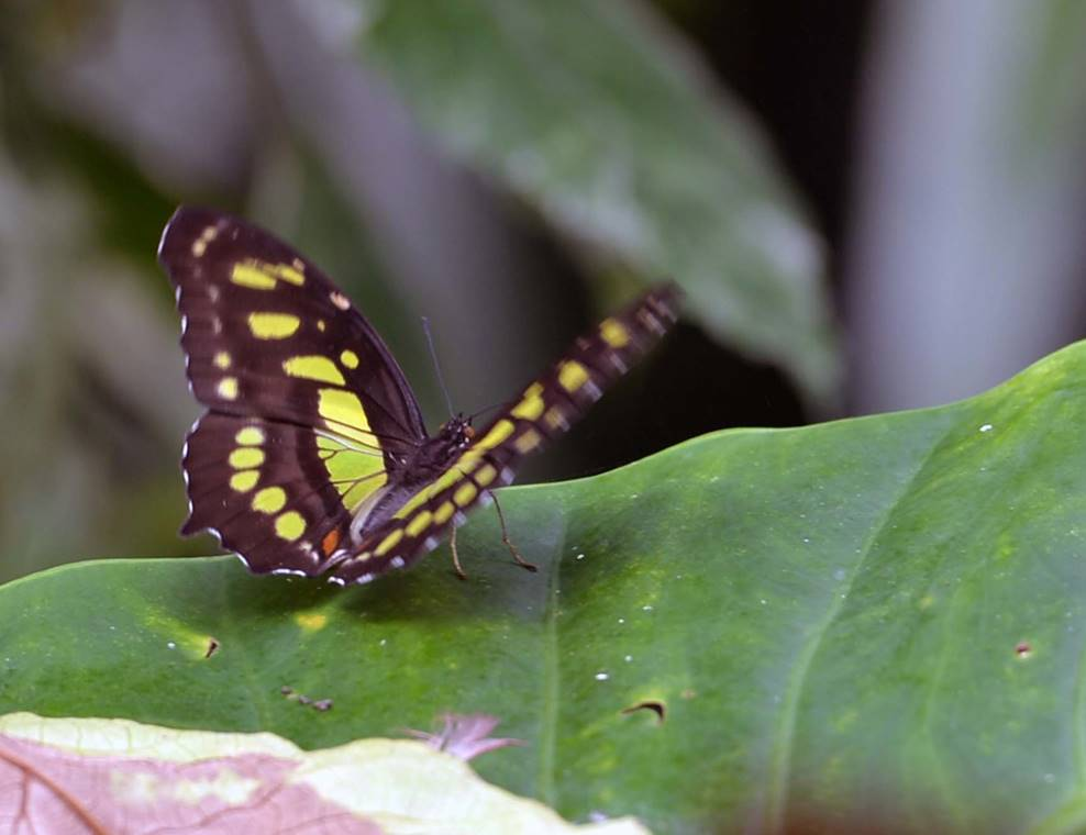 jardin-aux-papillons-morbihan-bretagne-sud-16
