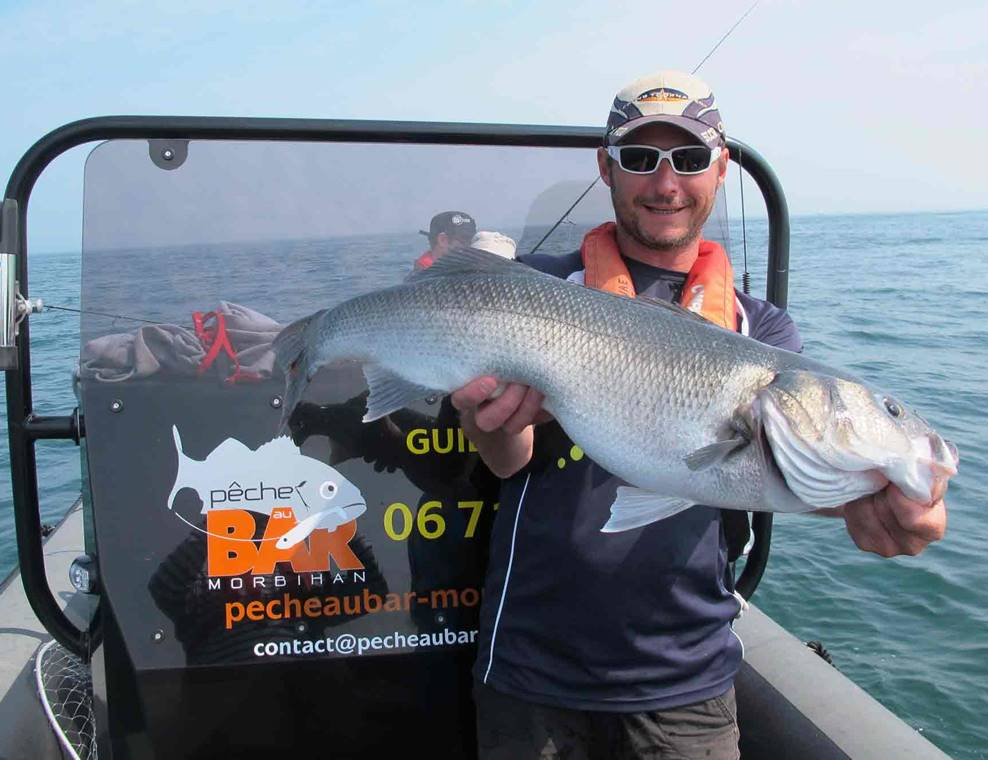 Pêche-au-Bar-Golfe-du-Morbihan-Bretagne sud
